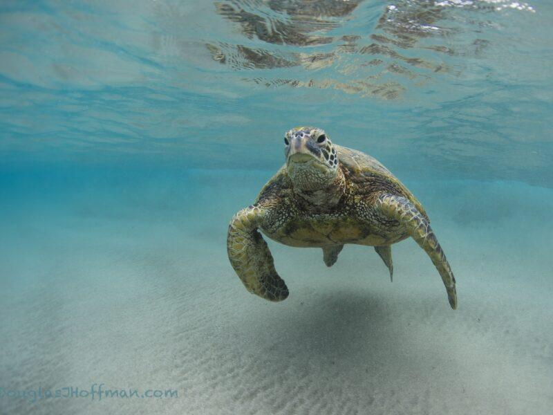 Sea Turtle Photography