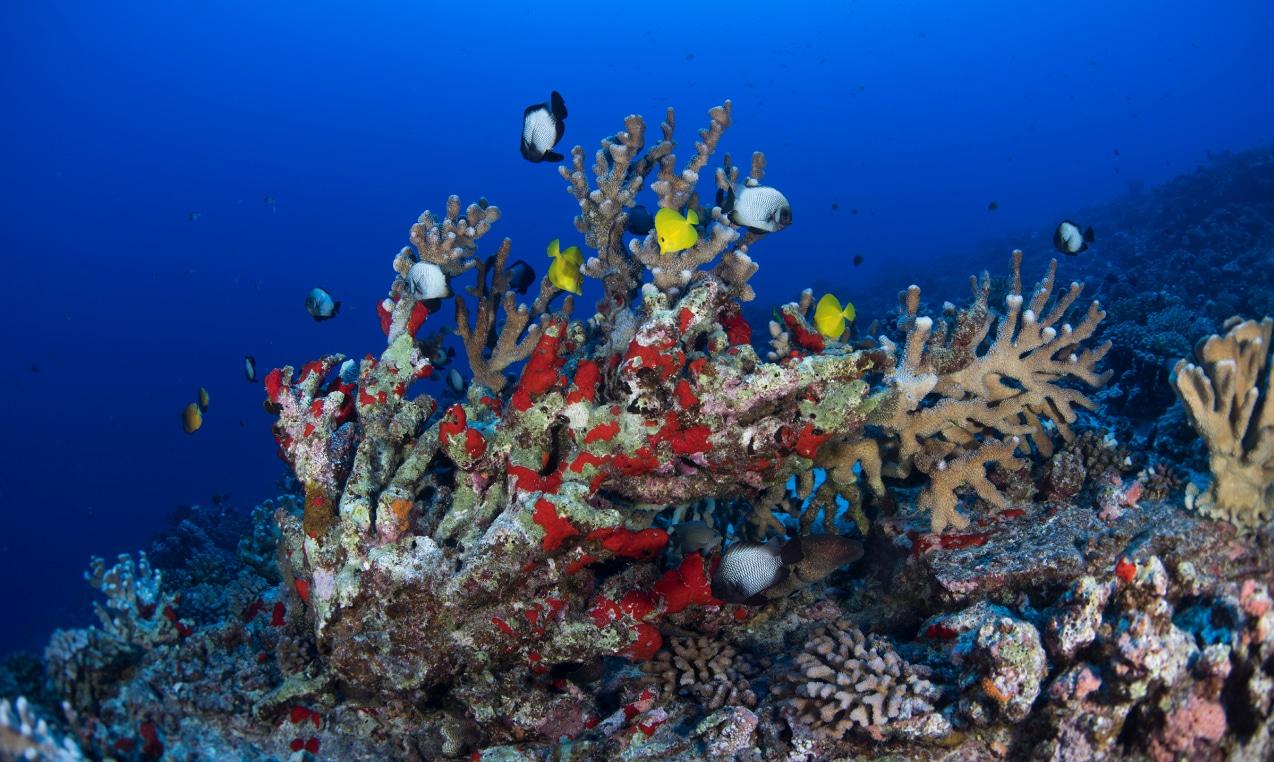 Deep-Reef-Molokini 1
