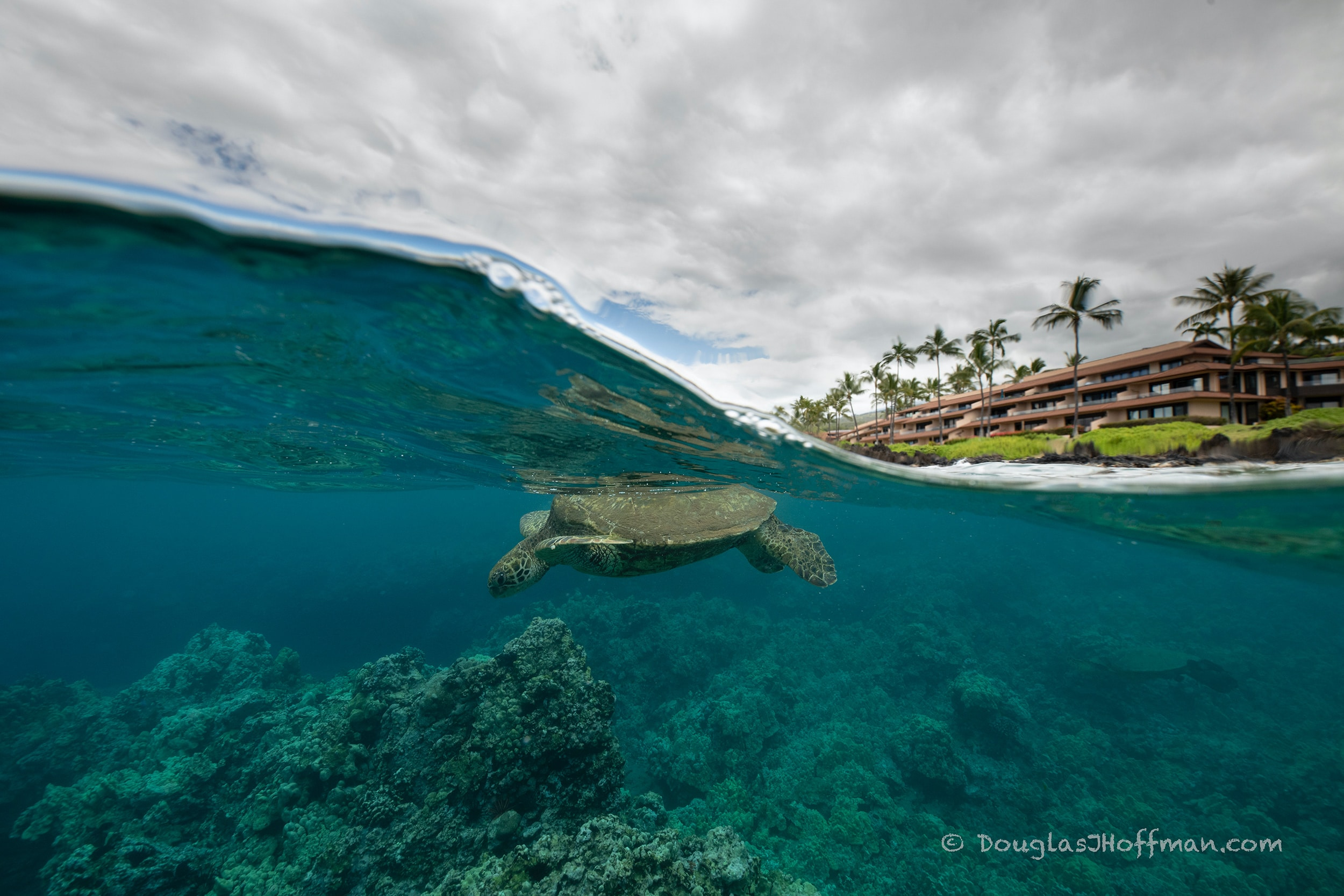 Honu at Makena Surf