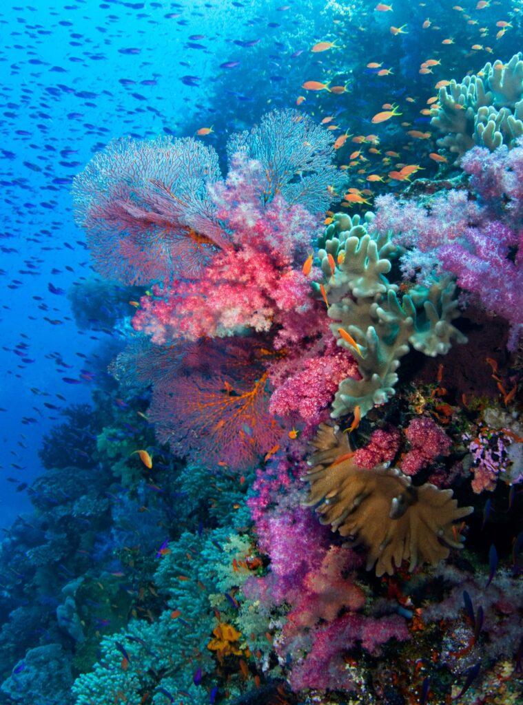 Fine Art Underwater Photography